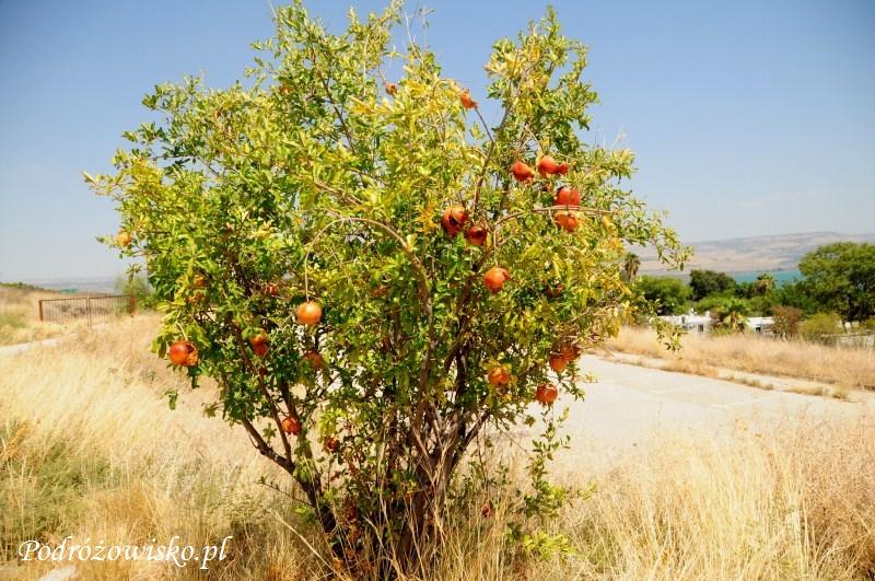 Flora Izraela