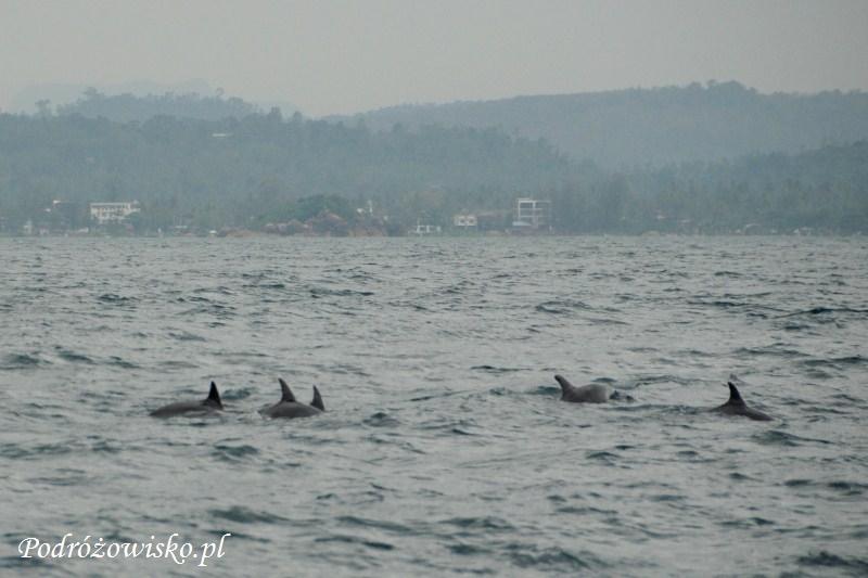 Fot. Delfiny butlonose