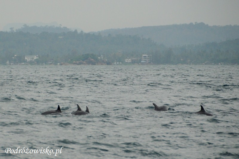 Mirissa - wieloryby (16)