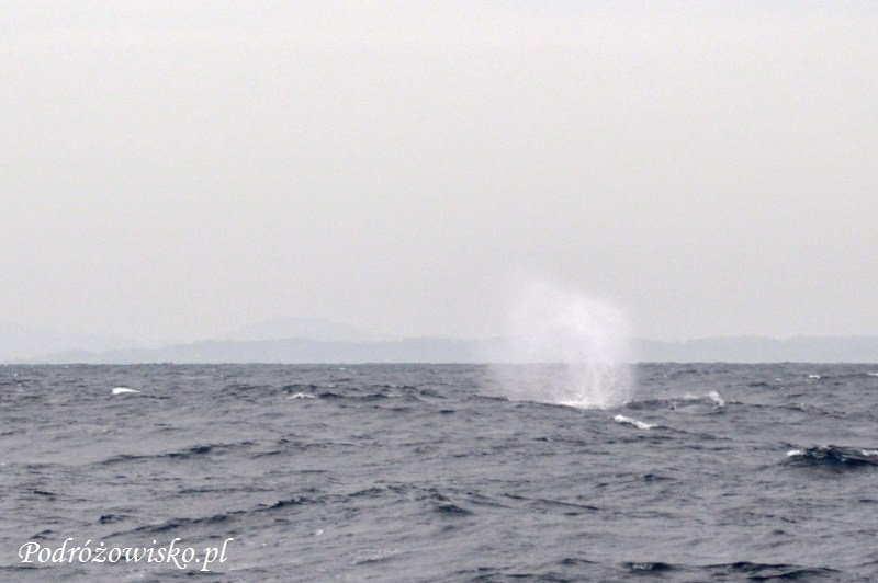 Mirissa - wieloryby (19)