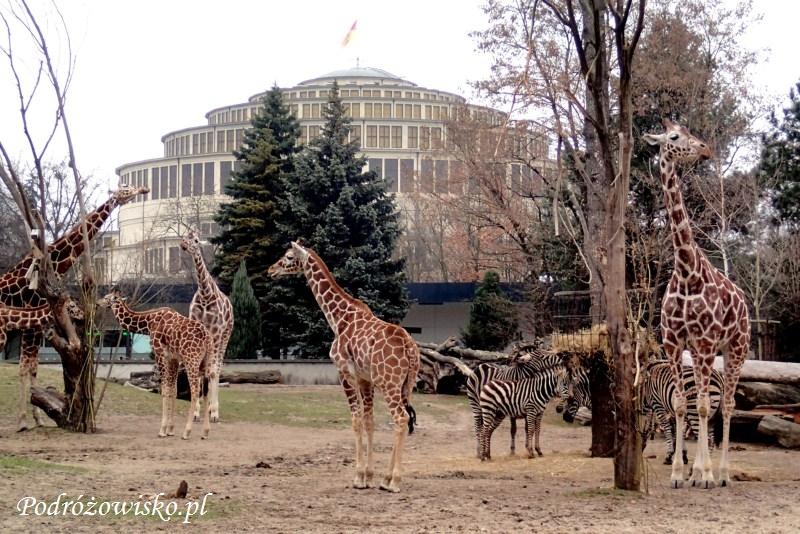 Zoo we Wrocławiu (10)