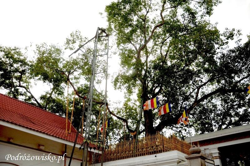 Anuradhapura (19)