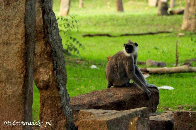 Anuradhapura (46)