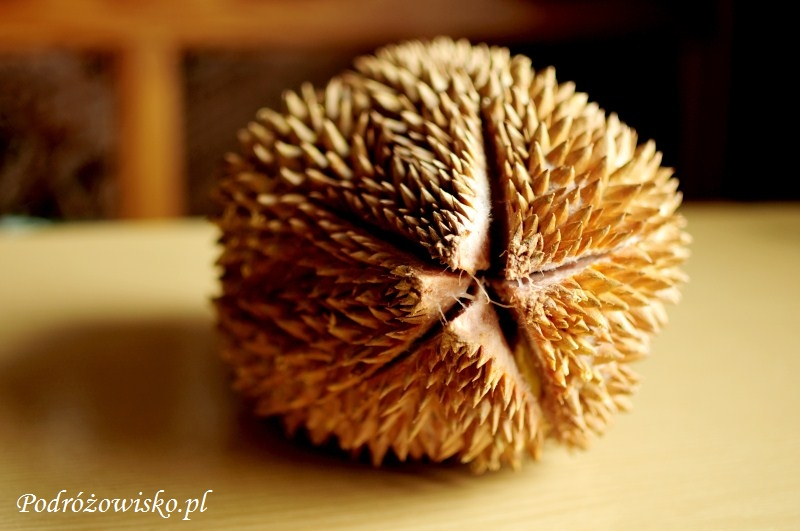 Durian (3)