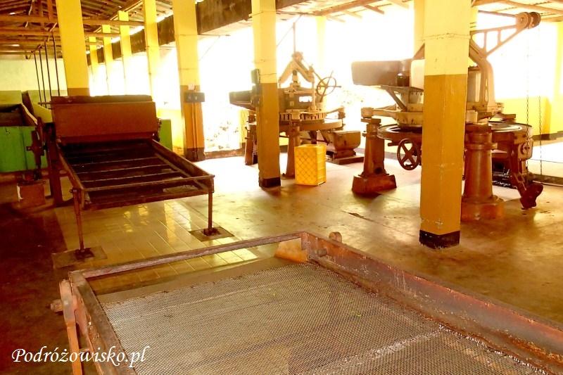 Fabryka herbaty w Ahangama (12)