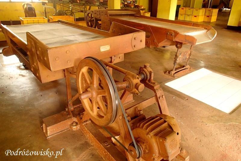 Fabryka herbaty w Ahangama (15)