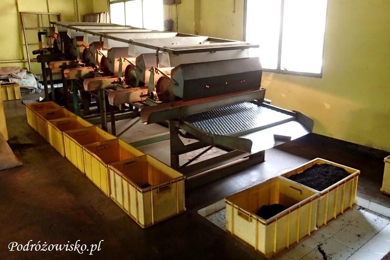 Fabryka herbaty w Ahangama (16)