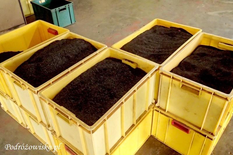 Fabryka herbaty w Ahangama (17)