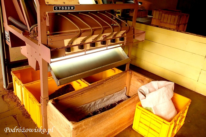 Fabryka herbaty w Ahangama (18)