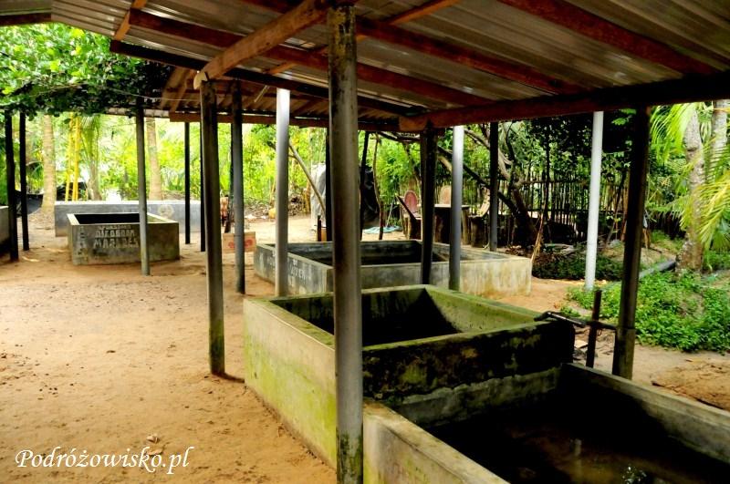 Farma żółwi w Kosgoda (10)
