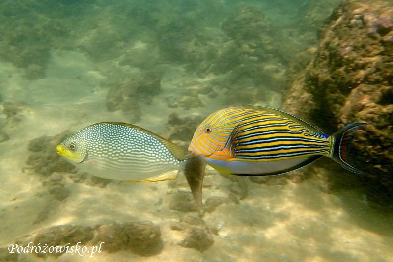 Rafa koralowa - Sri Lanka (17)