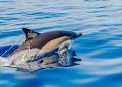 Azory: Rejs na wieloryby – z kim płynąć?