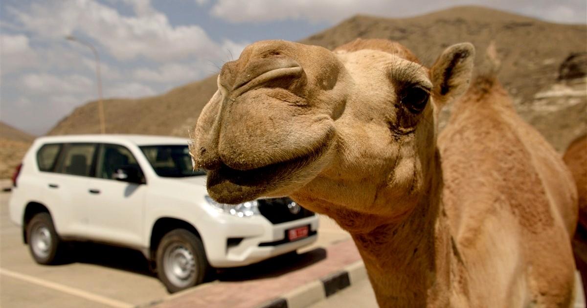 Oman informacje praktyczne